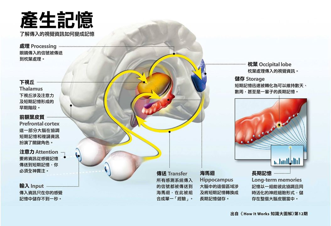 記憶形成的腦內機制圖解。本圖節錄自《How It Works 知識大圖解 國際中文版》第 12 期(2015 年 9 月號),全見版請點擊本圖放大。