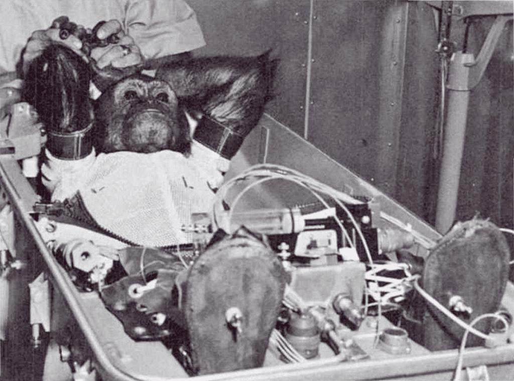 1961 年搭乘太空船完成次軌道飛行的黑猩猩 Enox。 圖片來源:Wikipedia