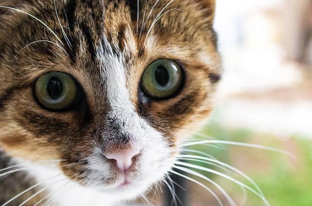 2008 年美國國防高等研究計劃署提出 SyNAPSE 專案計畫,目標發展仿神經網路低功耗處理器硬體,並挑戰機器人智能達到貓的層次。圖/Mohamed Aymen Bettaieb @ Flickr