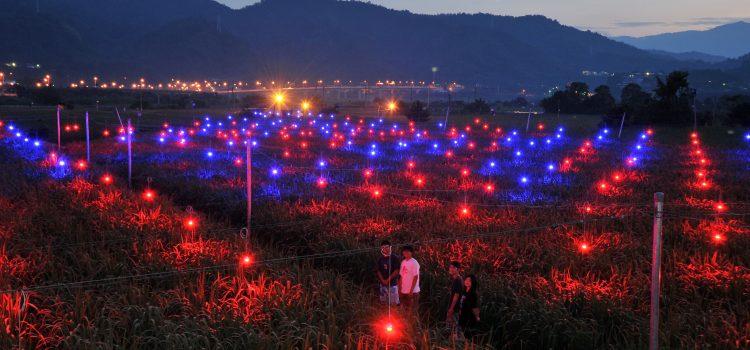 落入筊白筍田的省電燈泡,是農友不再看天吃飯的密技?-《為什麼非要創新不可